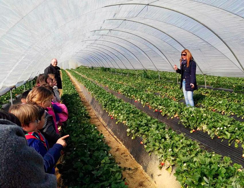 Los niños de Moguer conocen de primera mano los cultivos de fresas de Cuna de Platero
