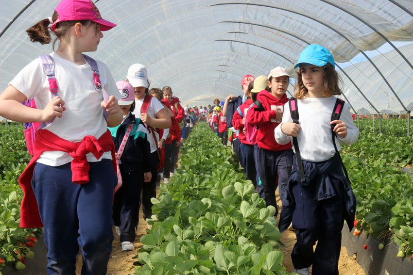 fresas y berries Cuna de Platero educacion ambiental y alimentaria