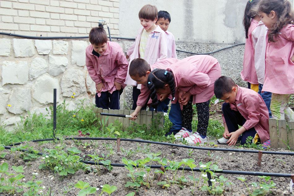 Fresas de Cuna de Platero en el huerto escolar