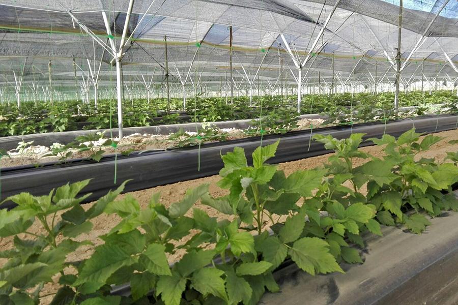 plantacion-adelita-web