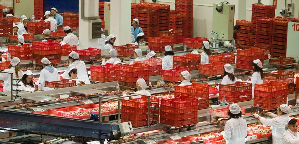 Cuna de Platero, la segunda cooperativa de la provincia, fortalece la economía local gracias a la creación de empleo