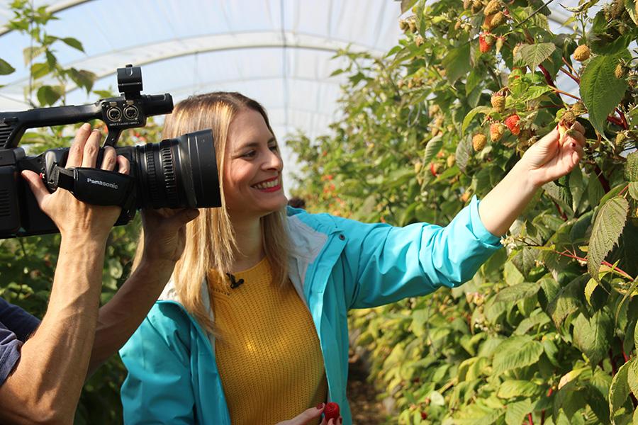 Cuna de Platero dará a conocer la frambuesa y curiosidades sobre la fresa a través del programa 'Aquí la Tierra'