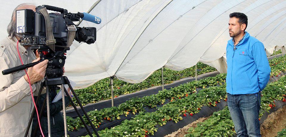 """Cuna de Platero muestra en """"Agrosfera"""" todo el proceso de la fresa desde el campo hasta el supermercado"""
