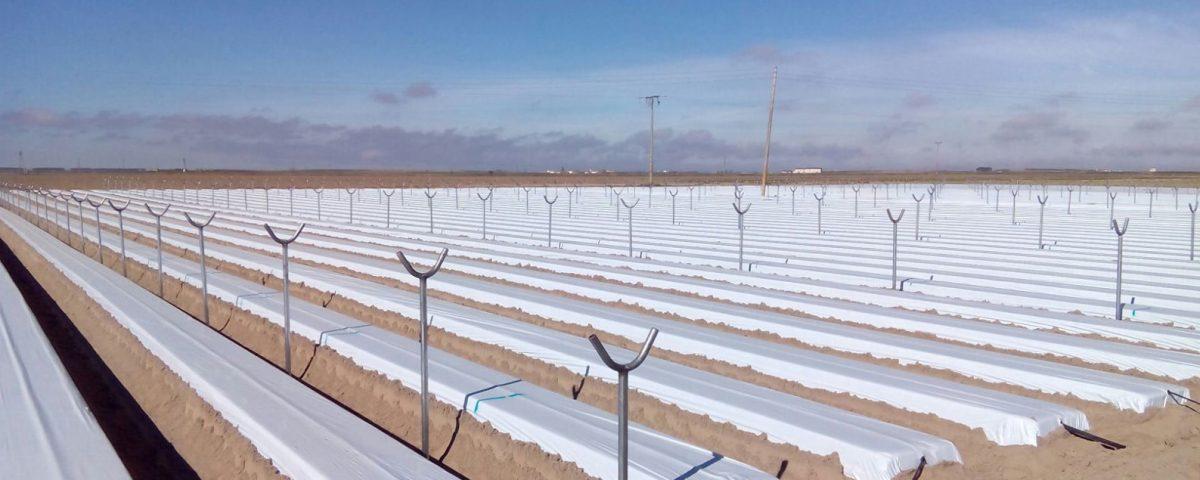 Cuna de Platero comienza los trabajos para plantar fresa en Ávila y poder ofrecer berries todo el año