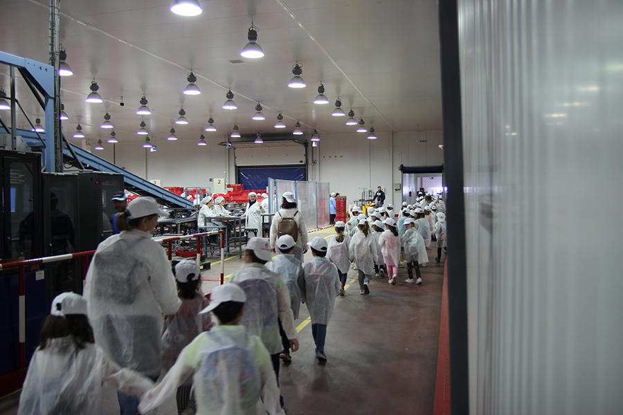 Cuna de Platero descubre el cultivo de la fresa a un centenar de niños del Colegio Santo Ángel de Huelva
