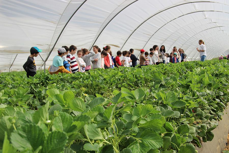 Visitaron una plantación y las instalaciones de la cooperativa