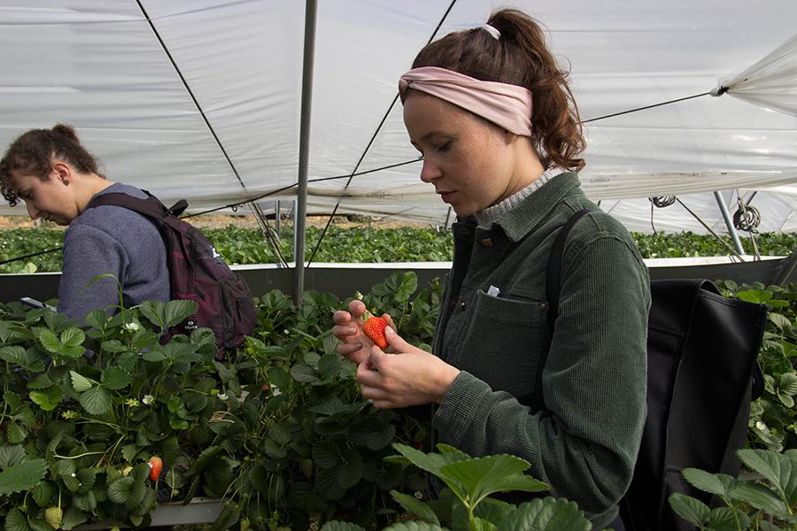 Cuna de Platero promueve la alimentación saludable entre una treintena de estudiantes Erasmus de la UHU