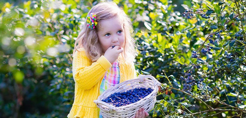 Los 'berries', fuente de salud
